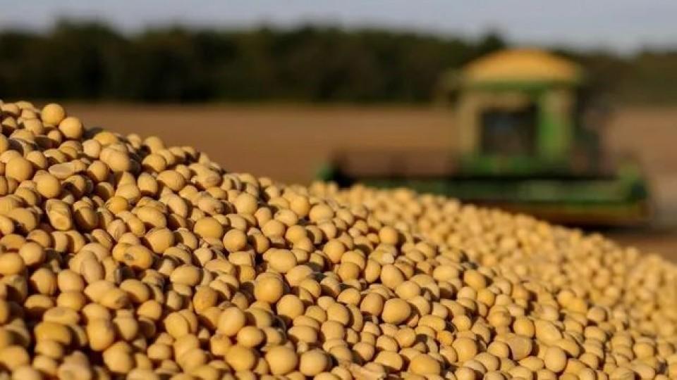 F. Morixe: ''La soja sigue volátil, pero en suba'' —  Agricultura — Dinámica Rural | El Espectador 810