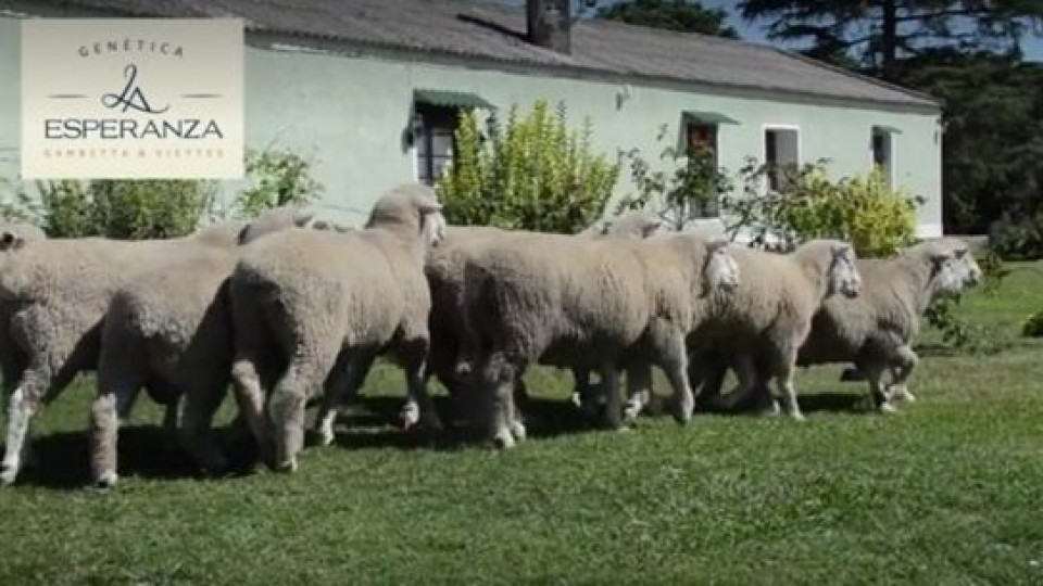 Zambrano remata genética de ''La Esperanza'' —  Ganadería — Dinámica Rural   El Espectador 810