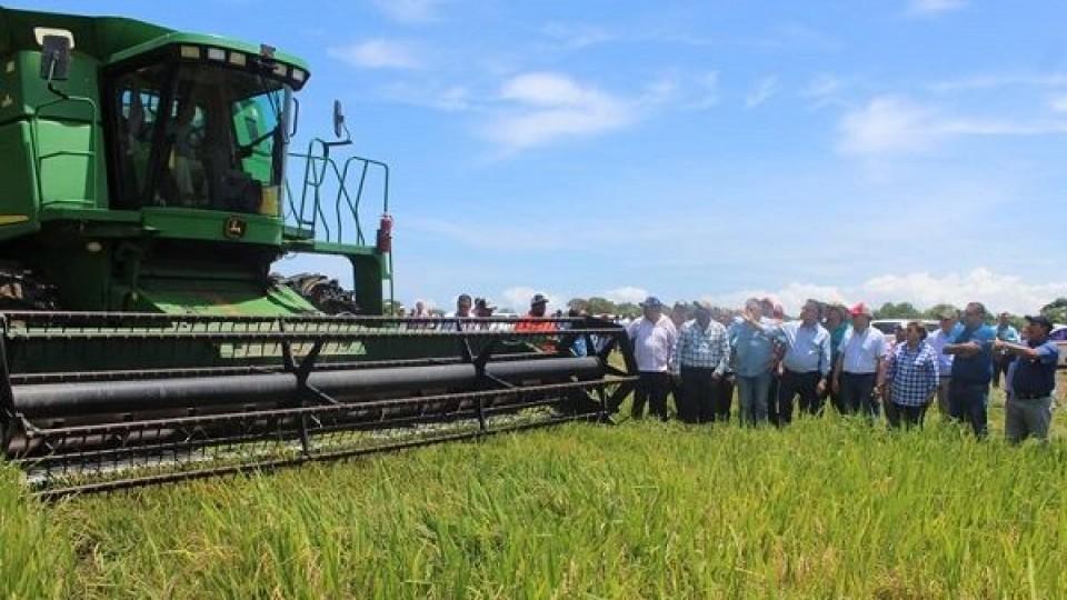 A. Lago: ''En un año diferente, confiamos en el sector arrocero'' —  Agricultura — Dinámica Rural | El Espectador 810