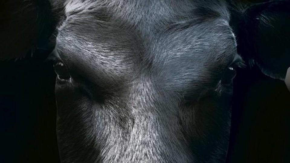 D. Oribe: ''Cada Gala Angus es el reflejo del crecimiento constante de la raza'' —  Ganadería — Dinámica Rural | El Espectador 810
