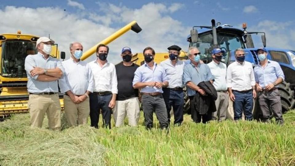 Quedó constituida la cosecha de arroz ''con mejores perspectivas de competitividad'' —  Agricultura — Dinámica Rural | El Espectador 810